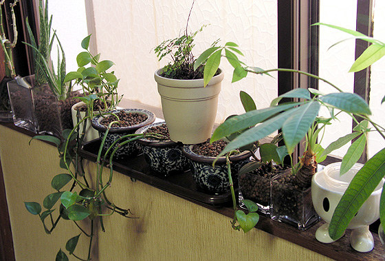 20091231_plants02